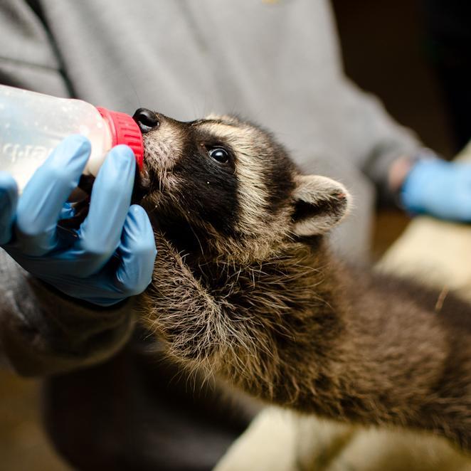 Solaris donates Lytbot to Canadian Wildlife Rehabilitation Center